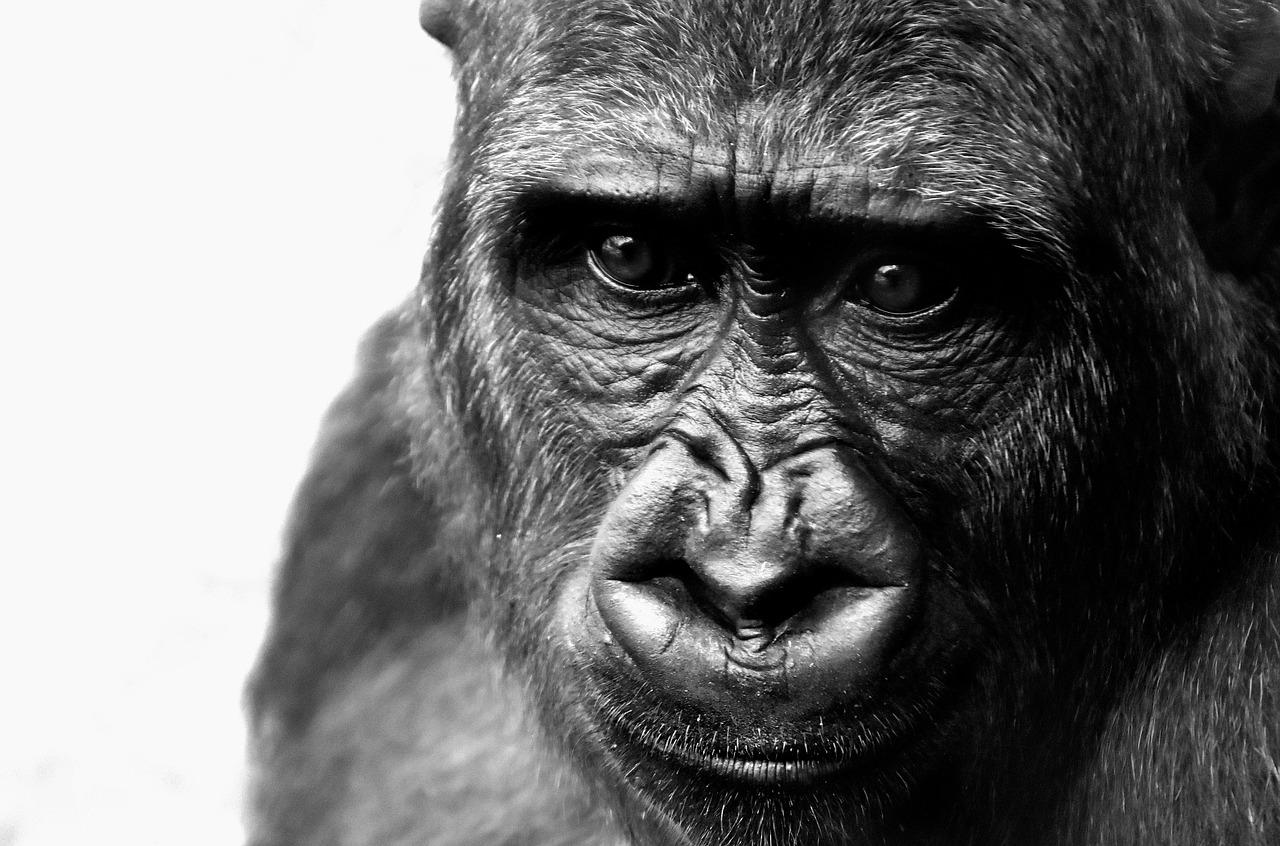 Izumiranje vrsta je prijetnja čitavoj civilizaciji